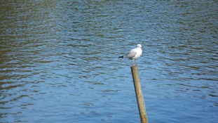 bird on stick in water