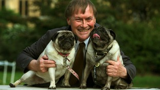 Pugs, Lily and Bo belonging to MP David Amess