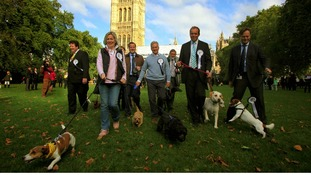 MPs walk their dogs during the Westminster Dog of the Year competition at Victoria Tower Gardens