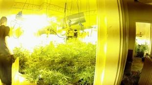 Exposure: Britain's Booming Cannabis Business.
