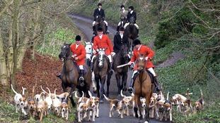 PM considers changes to fox hunting legislation