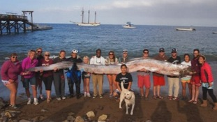 More than 15 people helped Jasmine Santana the 18-foot-long oarfish to shore.