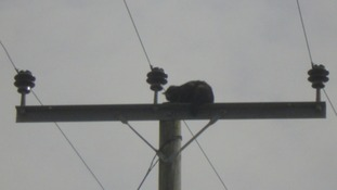 Coco the cat was stuck up the electricity pole in St Cyrus for almost 24 hours before being rescued.