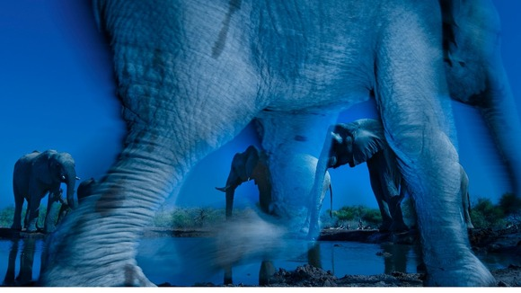 Winners of prestigious Wildlife Photographer of the Year award unveiled