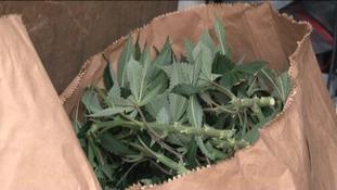 Police found £1.2 million of cannabis plants