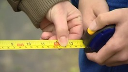 tape measure school