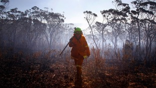 A female Rural Fire Service (RFS) firefighter walks through a burnt area near the Blue Mountains suburb of Blackheath