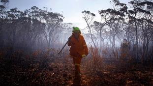 A female Rural Fire Service (RFS) firefighter walks through a burnt area near the Blue Mountains suburb of Blackheath