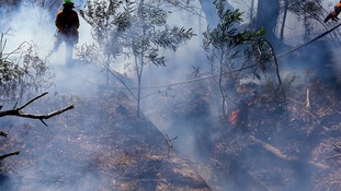 Smoke-filled forest near the Blue Mountains suburb of Blackheath