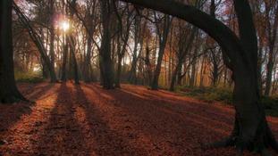 Hanbury Woods, Worcestershire