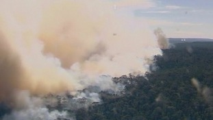 A shot of the bushfire billowing smoke from the tree canopy.