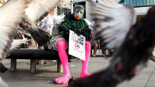 A man dressed as a pigeon in Liverpool city centre to warn of their detrimental affect.