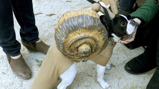 One four-legged contestant impresses judges with an elaborate snail costume.