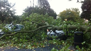 Tree brought down onto cars