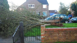 A fallen tree in Yeovil, Somerset
