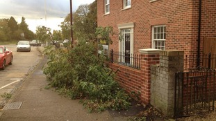 A tree is uprooted in Billericay, Essex.