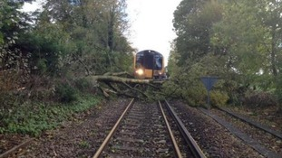 A tree on the line in Hampshire
