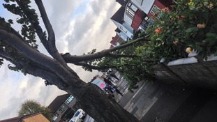 A broken branch in Greenford, north-east London