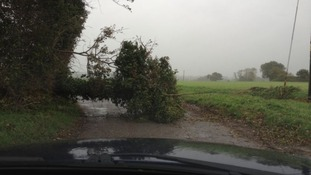A fallen tree blocks a road near Harleston, Norfolk.