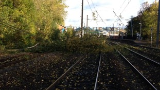 Fallen tree blocks the line near Hatfield.