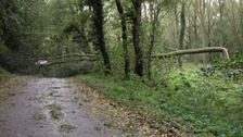 Strong winds across the region bring down trees in Norfolk.