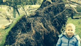 Jack Coombs next to a big root from a blown over tree this morning in Warren Heath, Ipswich.
