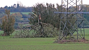 Fallen tree, High Road, Great Finborough.