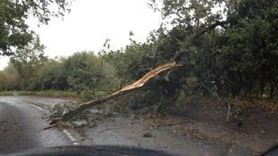 A fallen tree blocks a road in Norfolk.