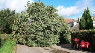 John Hancock a postman from Essex sent in this picture of a tree that had fallen in Thorrington pulling down the power lines.
