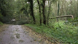 Fallen trees cause travel problems across the county.