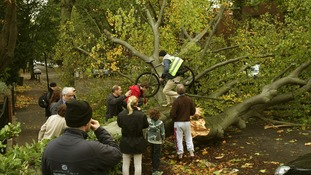 A cyclist climbs over a fallen tree lying across the road
