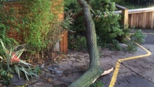 More than 12 trees were brought down by the storm at Colchester Zoo forcing it to close yesterday.