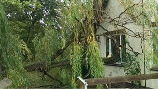 The top of a willow tree snapped off during the storm.