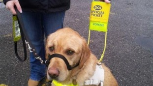 Bertie the Guide Dog out on strike with his owner.