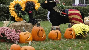 Presidential dogs Sunny and Bo are depicted as trick-or-treaters  in decorations ahead of a children's reception on the South Lawn