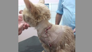 Phoenix the Cat was shot