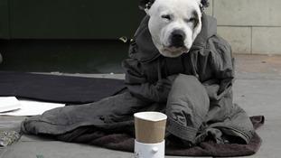 Street artist's dog