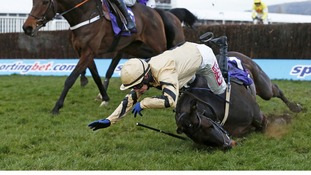Jockey falling at Cheltenham races