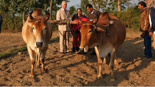 Prince Charles talks to a farmer at the Navdanya Bija Vidyapeeth Farm.