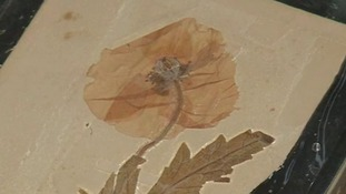 The pressed flower was given to 13-year-old Joan Banton in 1923 by Private Cecil Roughton.