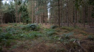 "The Rendlesham Forest incident has been alluded to as ""Britain's Roswell""."