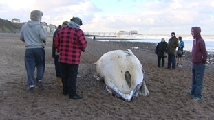 A dead Minke whale has washed up on the North Norfolk coast today.