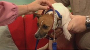 Ruby tries on her old collar on Daybreak, showing her huge weight loss.