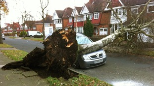 The tree fell across Mr Sial's car.