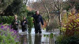 Head Gardener Steve Edney wades through flood water as he rescues rare plants with his team from the Secret Gardens of Sandwich.