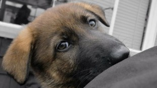 Police Puppy Academy! Met Police dogs learn tricks of the trade