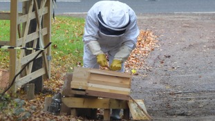 Volunteer keeper Rod Oates tends to the hive