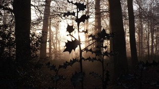 A misty morning in Waingroves Woods, Derbyshire