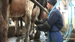 Meet the farmers with the mobile milking parlour