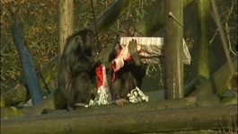 Christmas comes early at Whipsnade